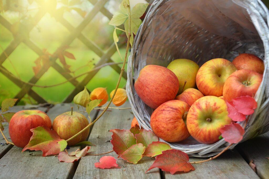 bio-jablka